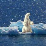 climat-ours-polaire