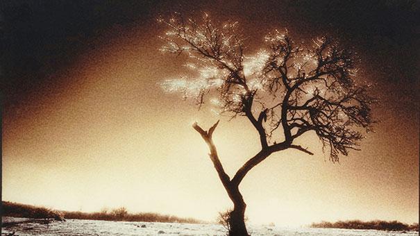 arbre emblématique de Philippe Musch